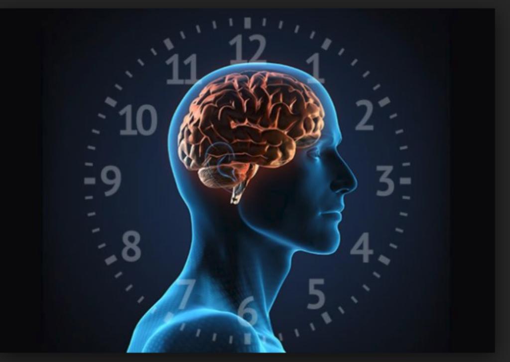 ritmo circadiana